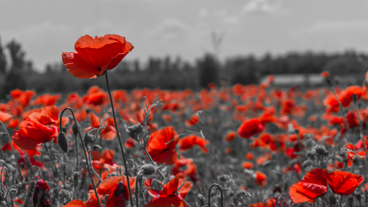 Remembrance Day **No Skating Today**
